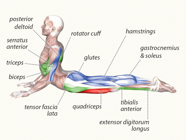 yoga cobra pose